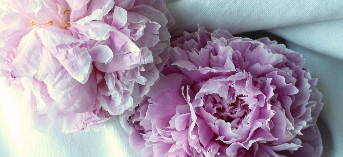 Hyacinthtales